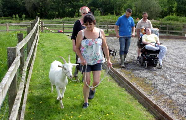 Walking the goats at Kerry Farm