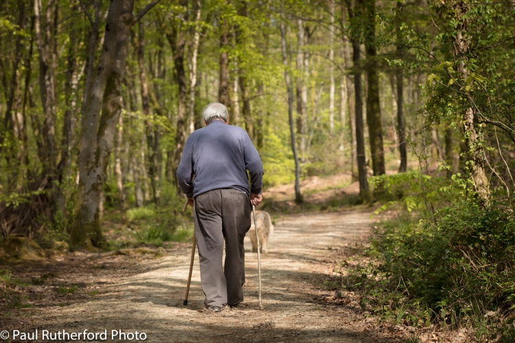 An old man walking his dog in the woods.