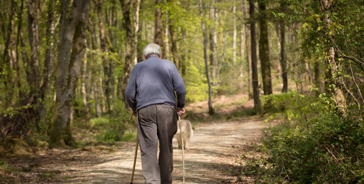 A photograph of an old man walking his dog in Minwear Woods, Pembrokeshire.