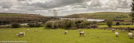Rosebush reservoir in spring